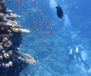 De 5 bedste dykkersteder i Asien